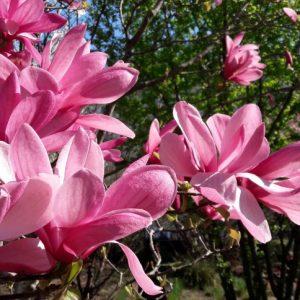 Le printemps n'est pas seulement une des saisons de l'année, un moment parmi tant d'autres, mais que le renouveau verdoyant de la nature